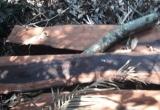Quảng Bình:  Tiết lộ bất ngờ về chân tướng nhóm lâm tặc phá rừng gỗ quý ở Phong Nha - Kẻ Bàng