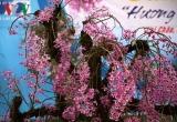 Rực rỡ hương sắc lan rừng Lai Châu
