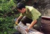 Đắk Nông:  Bắt giữ xe chở 17m3 gỗ lậu