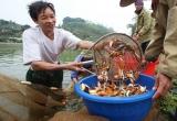 Dân làng cá chép tất bật phục vụ Tết ông Công ông Táo