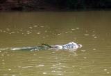 Hải Dương: Hoảng hồn phát hiện thi thể người trong bao tải trôi sông