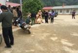 Vụ cô giáo lùi xe làm học sinh tử vong: Chưa khởi tố vụ án