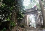 Hà Nội: Cả làng Phụ Chính 'phát sốt' vì cây sưa trăm tỷ sắp mục nát