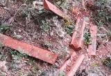 Vườn quốc gia Phong Nha – Kẻ Bàng đang bị 'lâm tặc' tàn phá