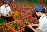 Nông sản Việt trong TPP: Thử xem xét từng nước đối thủ