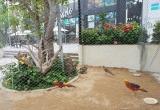 Tới FLC Sầm Sơn, chiêm ngưỡng vườn chim nhiệt đới bên bờ biển