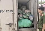 Thanh Hóa: Bắt giữ 1 tấn rưỡi bì lợn bốc mùi thối