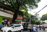 Đốn hạ, di dời 123 cây xanh để mở đường giảm kẹt xe ở Tân Sơn Nhất