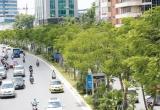 Hà Nội đã trồng mới 700.000 cây xanh