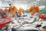 Phát triển thị trường cá tra: Tận dụng xu thế 'chuộng' thủy sản