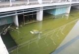 TPHCM: Trung tâm Triển lãm 800 tỷ dở dang, hoang tàn, ai phải chịu trách nhiệm?