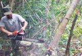 UBKT Trung ương xử lý vụ sai phạm rừng Phú Yên