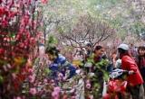 Hà Nội sẽ tổ chức 64 điểm chợ hoa Xuân phục vụ Tết Nguyên đán Kỷ Hợi