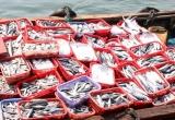 Quảng Trị: Phát hiện chất Phenol cực độc trong cá nục đông lạnh thu mua ngay sau thời điểm cá chết