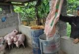 Chất cấm trong chăn nuôi: Đã được khống chế?