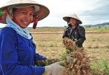 """""""Kéo"""" phụ nữ nông thôn vượt qua khoảng trống của chính sách thai sản"""