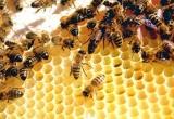 Chuyện không mới của mấy con ong