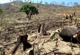 Khi những cánh rừng biến mất