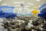 Hàn Quốc: Thị trường tiềm năng cho xuất khẩu tôm Việt