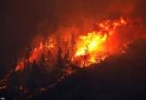 Bình luận về thảm họa cháy rừng, ông Trump khiến dư luận nổi giận