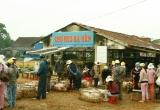Năm Hợi, về xứ Quảng nghe kể chuyện nghề bồng heo lấy may