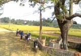 Giải mã chuyện 'cây gạo bị ma ám' ở Phú Thọ