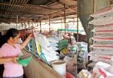 Thả nổi cho DN nước ngoài: Ngành thức ăn chăn nuôi thiệt hại lớn?