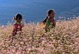 Du lịch Việt Nam: Bao giờ thoát được tư duy 'ăn sẵn'?