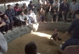 Đột nhập sới gà cá độ 'khủng' xứ Nghệ
