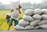 Năm 2015 sản lượng lúa gạo tăng hơn 200.000 tấn