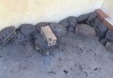 Tây Ninh: Vận chuyển trái phép rùa và khỉ từ Cam-pu-chia