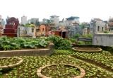 Hà Nội: Rau xanh mơn mởn mọc kín nghĩa địa