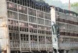 Heo Việt Nam rớt giá thê thảm tại cửa khẩu Trung Quốc