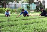 Vườn rau sạch nhân ái