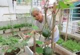 """Vườn rau xanh rộng 25m² mùa nào thứ ấy của """"Lão Nông Phố"""" ở Hà Nội"""