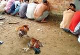 Hải Dương: Bắt 70 đối tượng đang đá gà ăn tiền