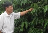 Kom Tum: Người cựu chiến binh nặng lòng với cây cà phê