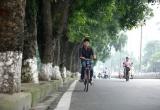 106 cây cổ thụ trên đường Kim Mã sẽ được di chuyển về Văn Giang