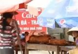 Đặc sản thịt lợn mán được chế biến từ lợn chết tím tái, bốc mùi
