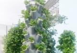 Ngỡ ngàng vườn rau sạch đẹp như cây cảnh
