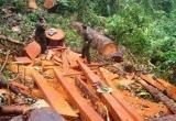 Nghệ An: Lâm tặc hung hãn dùng gậy sắt đánh gục cán bộ kiểm lâm