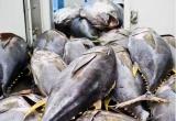 Điểm báo ngày 3/1/2017: Muốn bán cá ngừ, phải bảo vệ cá heo