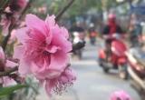 Bản tin Tết Việt: Năm nay, thời tiết thuận lợi cho việc du xuân