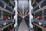 Nhà máy sản xuất trứng gà sạch công nghệ cao lớn nhất Việt Nam sắp khánh thành