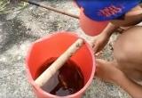 Bé 10 tuổi câu cá bống kiếm 100.000 đồng một ngày