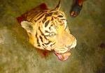 Nghệ An: Mở ngăn tủ cấp đông phát hiện 5 xác hổ đã bị mổ lấy nội tạng