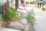 Clip: Hai thanh niên dùng súng điện trộm chó giữa ban ngày