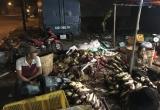 Hàng trăm kg bắp chuối bào ngâm trong hóa chất độc hại