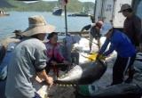Cá ngừ Việt Nam được xuất khẩu sang gần 140 nước