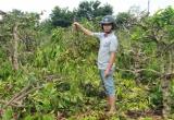 Cư M'gar- Đắk Lắk: Đau xót một gia đình bị chặt phá 445 cây cà phê